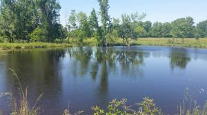 Pond_new