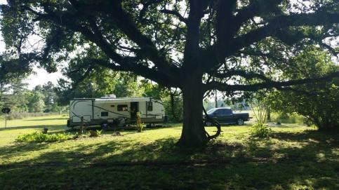 Trailer_truck_tree